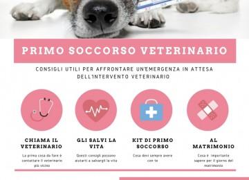 Primo soccorso veterinario