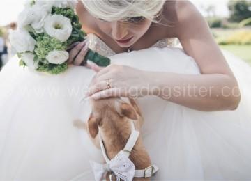 Le emozioni di una sposa con il cane