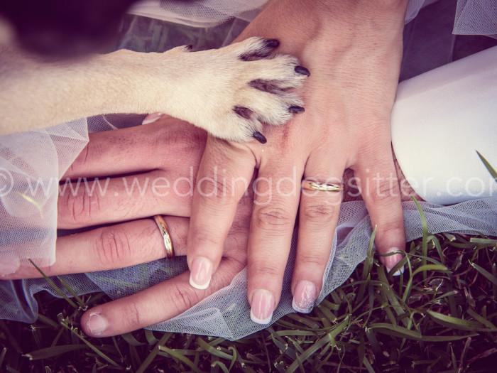 WEDDING DOG SITTER CANE AL MATRIMONIO www.emotionalphotographer.com_wds_carlino (178 di 208)