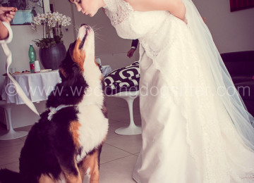 WEDDING DOG SITTER VENEZIA VENETO PADOVA www.emotionalphotographer.com_weddingreportageinvenezia_matrimonioavenezia_fotononinposavenezia_veneziafotomatrimonio (217 di 1350)