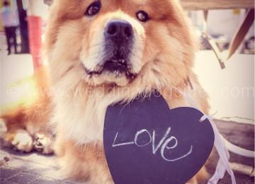 Matrimonio con il cane come ospite d'onore!