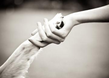 Le 20 cose importanti che chi ama i cani non dovrebbe mai dimenticare!