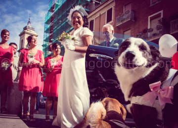 CANI AI MATRIMONI DOGSATWEDDINGS WEDDINGDOGSITTER ELISA GUIDARELLI