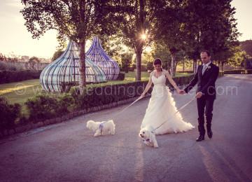 FARE FOTO CON IL CANE AL MATRIMONIO www.emotionalphotographer.com_weddinglameziaterme_reportagematrimoniocatanzaro_weddinginlameziaterme_fotografomatrimonicatanzaro (599 di 812)