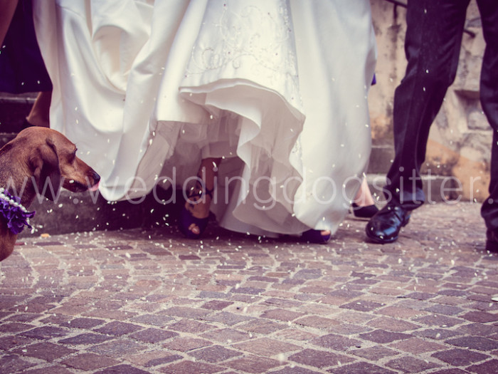 FOTO DAL PUNTO DI VISTA DEL CANE DEL MATRIMONIO WEDDING DOGSITTER MATRIMONIO BRESCIA LOMBARDIA www.emotionalphotographer.com_weddingdogsitterbrescia (84 di 180)