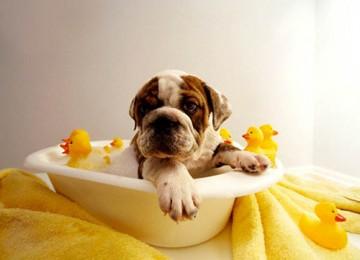 La toelettatura del cane, ossia lavare il cane – Consigli utili