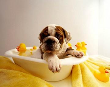 cane toelettatura consigli