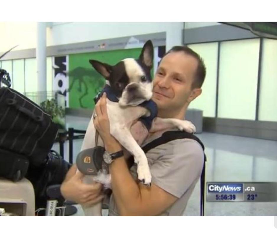 Pilota dirotta un aereo internazionale per salvare un cane for Cane nella cabina dell aereo