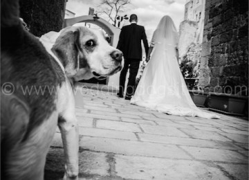 DOG SITTER BABY SITTER CANI MATRIMONIO
