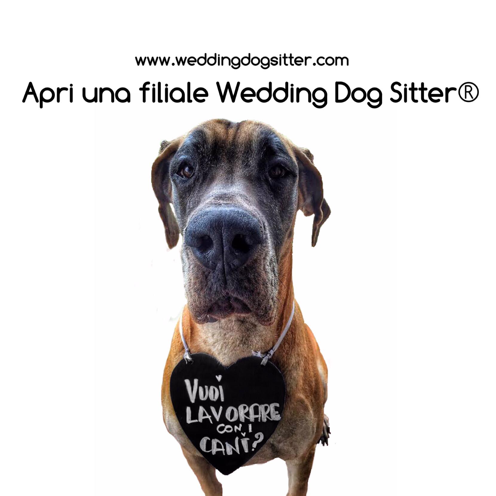 Amo i cani e vorrei lavorare con loro wedding dog sitter for Lavorare con i cani