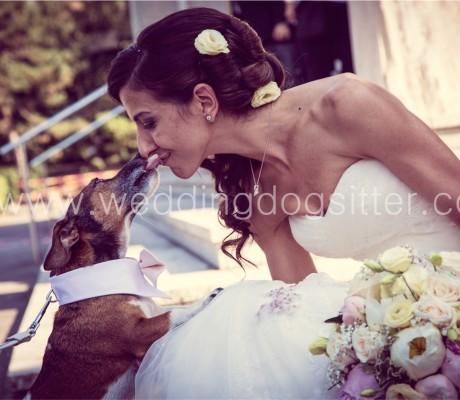 Lillo & Bamby alle nozze dei loro padroncini in provincia di Varese