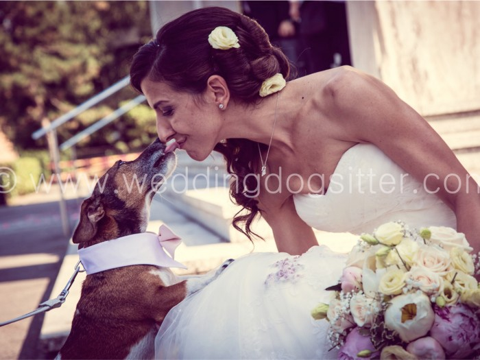 SPOSA CON JACK RUSSELL WEDDING DOG SITTER VARESE