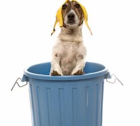 Precauzioni domestiche per evitare l'avvelenamento del proprio cane
