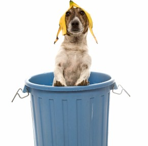 dog-in-garbage