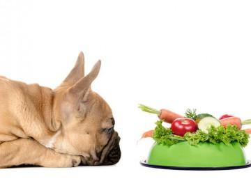 Ricetta crocchette per cani fatte in casa