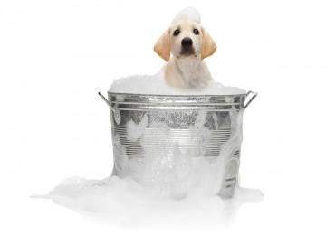 Le origini della toelettatura del cane.