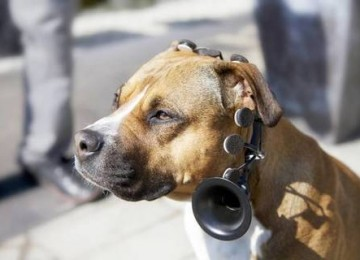 Il dispositivo che traduce il linguaggio dei cani: ecco come funziona e quanto costa