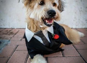 Investe un cane, quello che succede dopo è commovente!