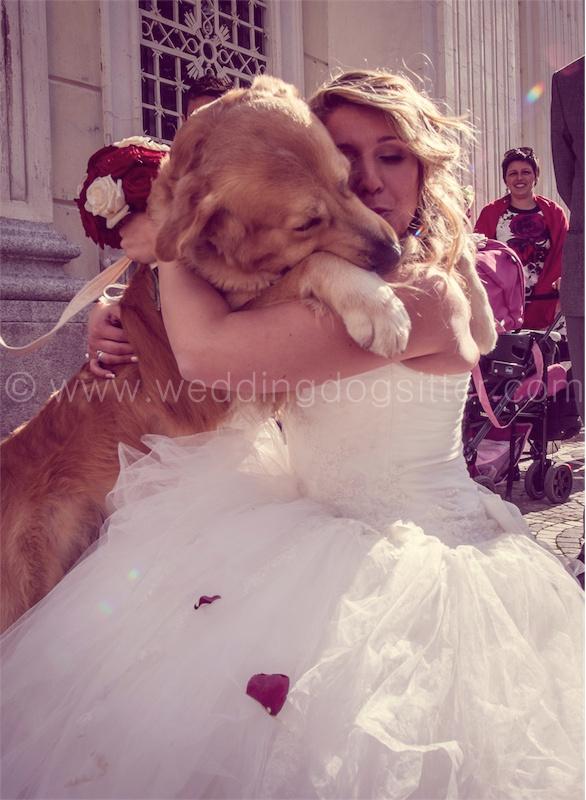 GOLDEN RETRIEVER AL MATRIMONIO CON WEDDING DOG SITTER VARESE, COMO, SVIZZERA071