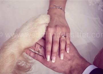 Lei lo porta al suo matrimonio ed il cane fa una cosa dolcissima…
