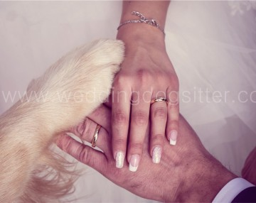 PORTARE IL CANE ALLE NOZZE MATRIMONIO WEDDING DOG SITTER VARESE, COMO, SVIZZERA115