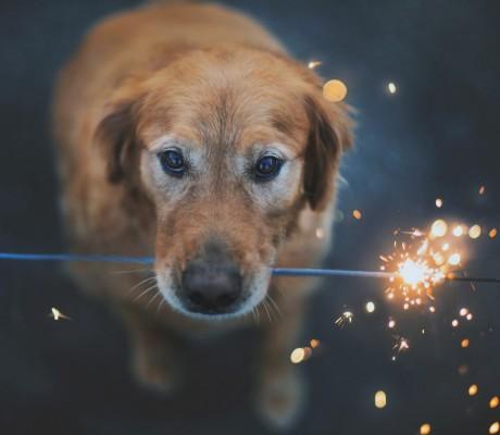 Fuochi d'artificio e cani come fare?