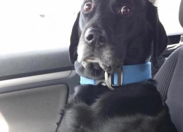 Viaggiare con un cane che soffre di mal d'auto o cinetosi