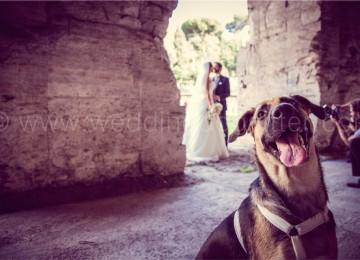 PORTARE IL CANE AL MATRIMONIO WEDDING DOG SITTER ROMA