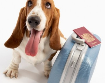 portare il cane in vacanza