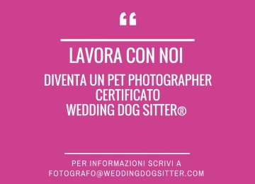 Collaborazioni fotografiche Wedding Dog Sitter