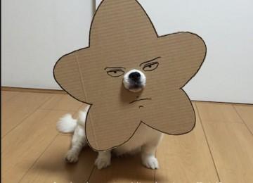 Idee costume halloween cane for Idee di cucina per halloween