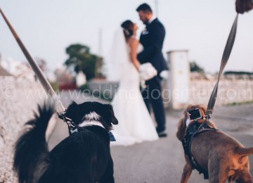 matrimonio con il cane il trappetello masseria monopoli