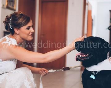 portare il cane al matrimonio taranto bari lecce alberobello otranto