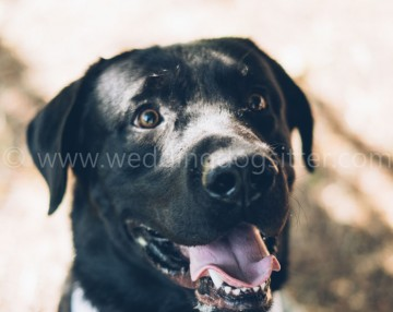 wedding matrimonio con il cane taranto