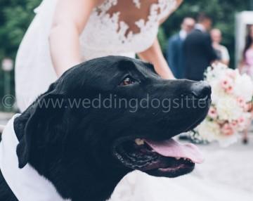 portare il cane al matrimonio