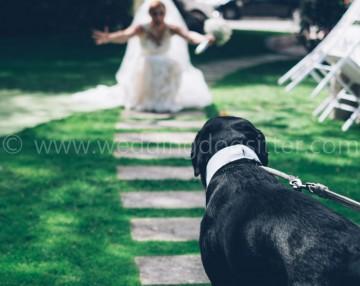 cane al matrimonio costi informazioni foto wedding dog sitter a taranto