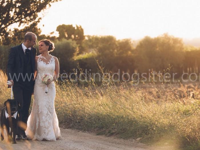 wedding dog sitter a taranto in tutta la puglia toscana emilia romagna e sardegna