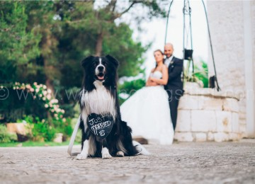 JUST MARRIED Wedding Dog ROMA