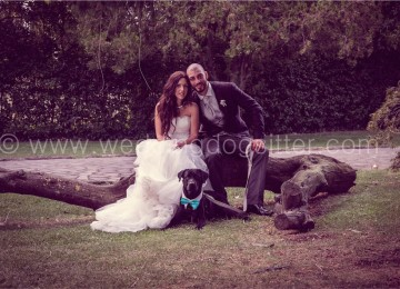 Getting Married in Italy and bringing my dog!
