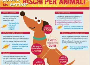 Caldo e colpo di calore nel cane consigli utili