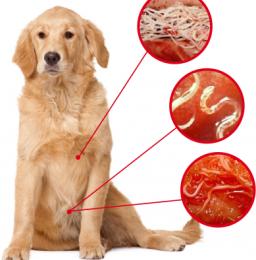 I 5 parassiti intestinali del cane