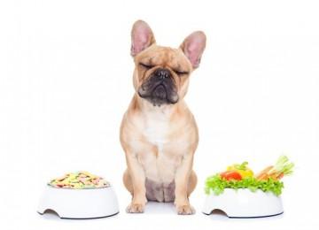 La pancreatite nel cane