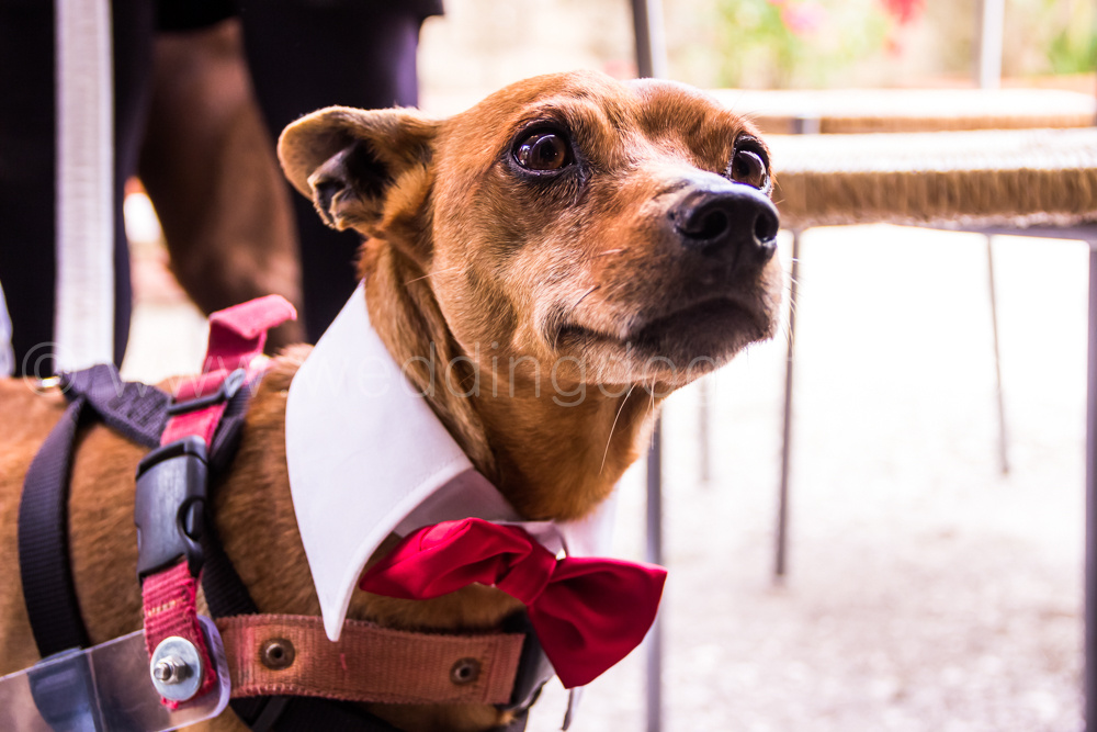 Come Diventare Dog Sitter: una guida completa per lavorare ...