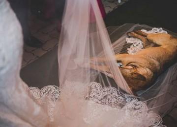 Un cane irrompe al matrimonio, la reazione della coppia ti lascerà a bocca aperta