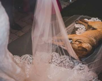 stray-dog-crash-wedding-matheus-marilia-pieroni-8-1