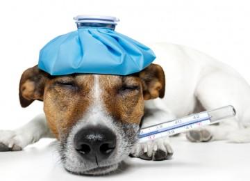 Come capire se il cane prova dolore?