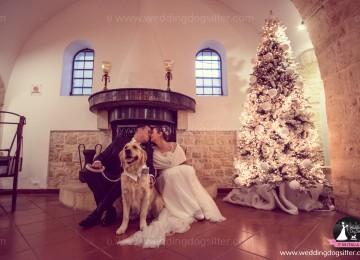Il cane al matrimonio in inverno!