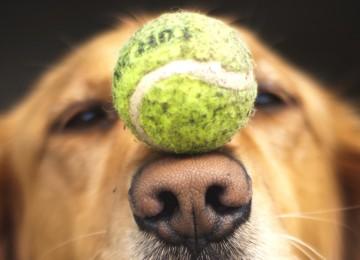 8 Cose che se hai un cane anziano dovresti fare e sapere!