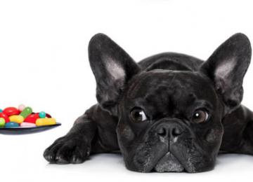 Scopri i 4 segreti per dare medicine al tuo cane senza stressarlo