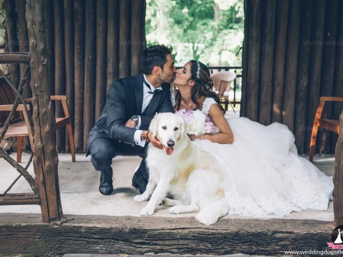 Wedding Dog Sitter Andrea e Francesca-85